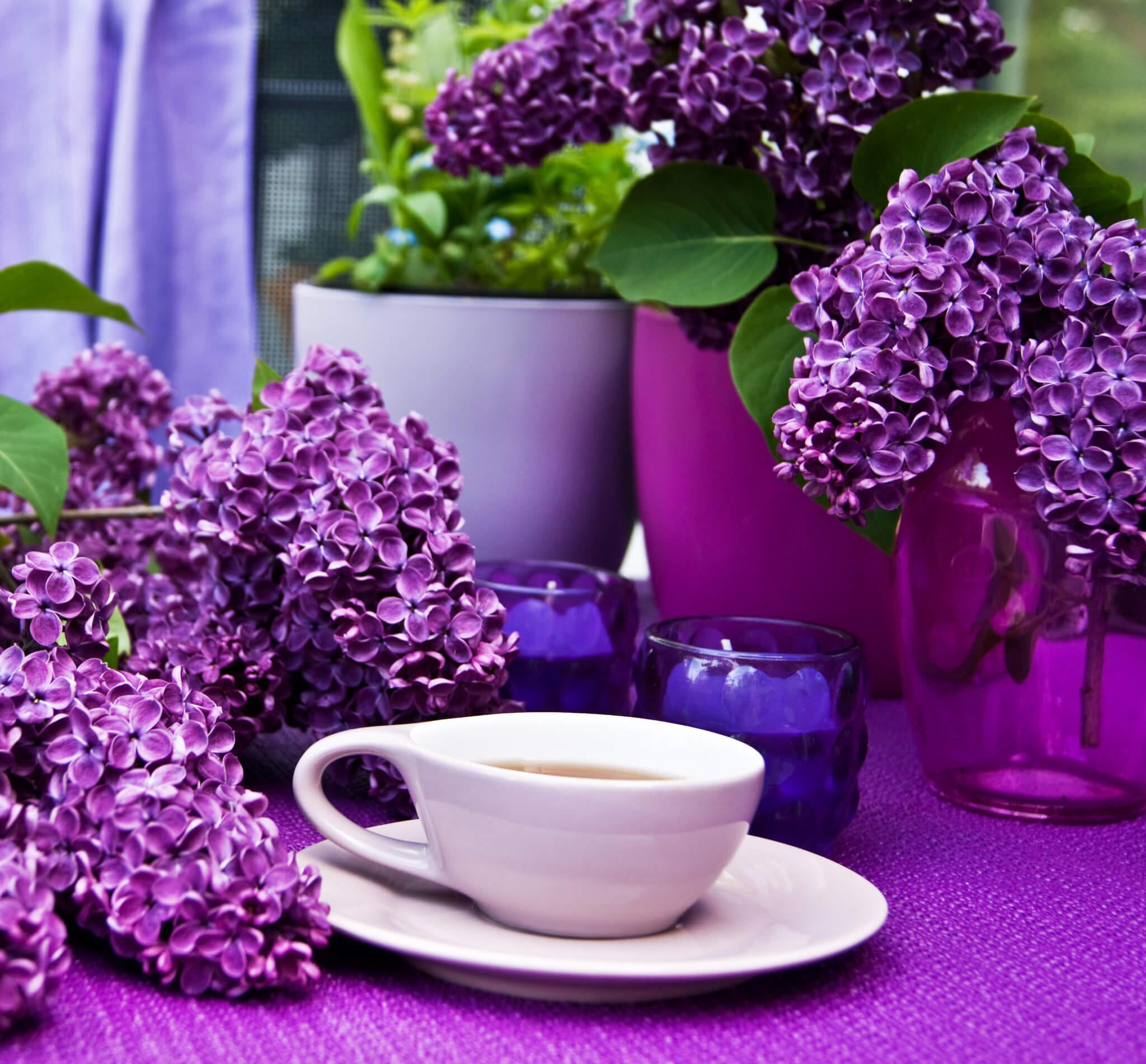 Ratgeber Farben violett